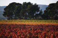 南フランス、紅葉が広がる秋の風景