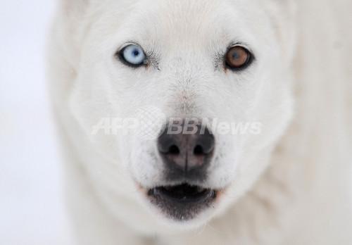 雪の中で犬ぞりレースの欧州選手権、スロバキア