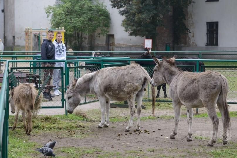 交尾を理由に別居させられたロバのカップル、同居再開 ポーランド