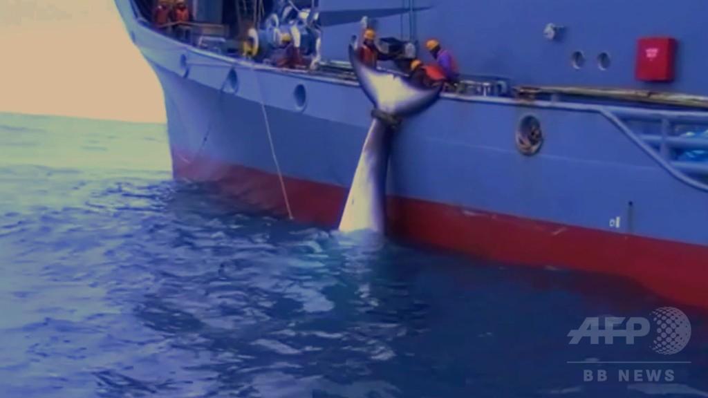 シー・シェパード、生々しい日本の調査捕鯨映像を公開 豪当局が撮影