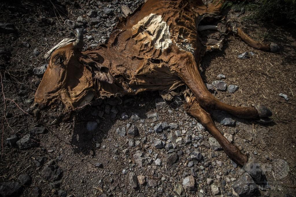 中米で深刻な干ばつ、農業に甚大な被害