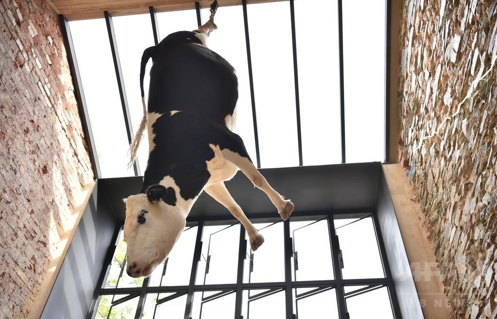 店内に牛のはく製つるした豪レストラン、「残酷」として物議醸す