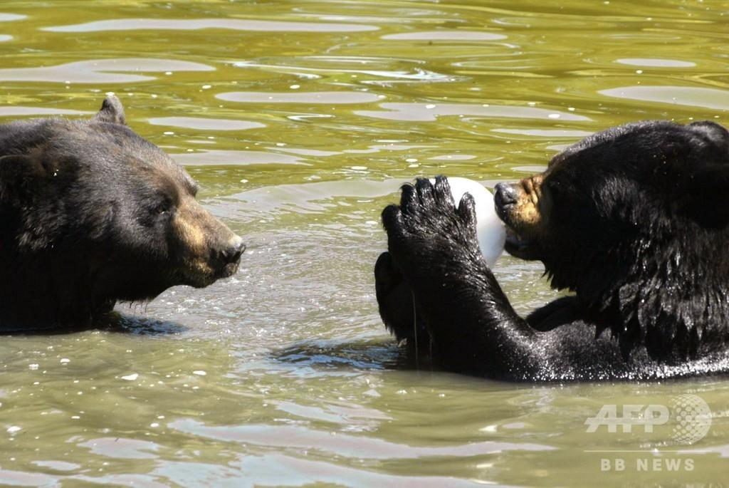 カナダの動物園で動物虐待か、所有者を逮捕 100頭以上保護