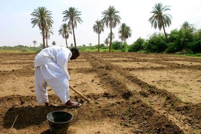 スーダンに待たれる真の「農業革命」、南部独立で浮上する経済不安