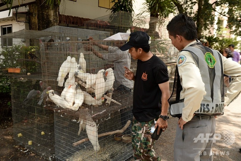 違法取引のオウムなど147羽を押収、タイ
