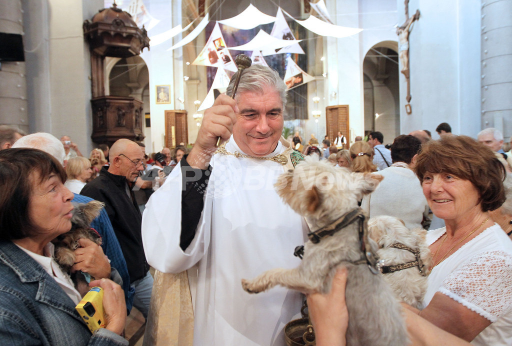 動物たちにも神の祝福を、フランス 写真22枚 国際ニュース:AFPBB News