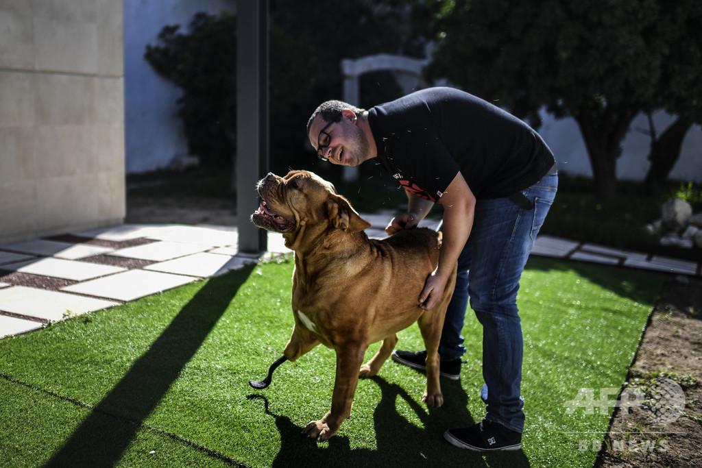 前足に腫瘍の犬、2度の手術乗り越え人工装具で新生活 ポルトガル