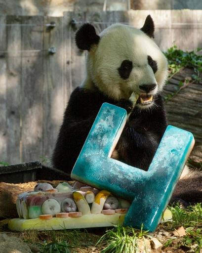 パンダの「ベイベイ」4歳に、ひんやりケーキでお祝い ワシントン