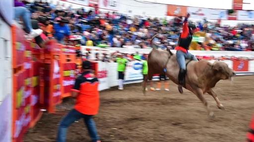 動画:年末を祝うお祭りで闘牛、中米コスタリカ