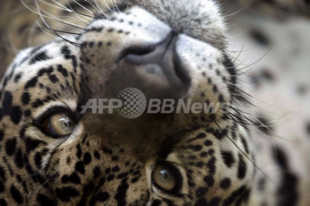 アマゾンに生きる絶滅危惧種の動物たち