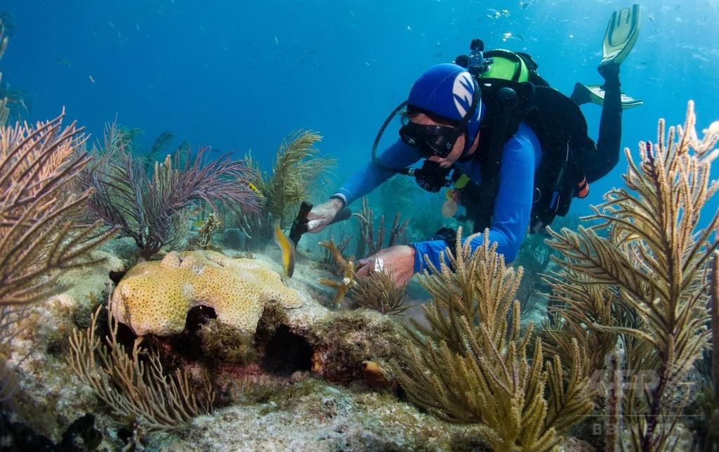 日焼け止め、世界のサンゴ礁に有害作用 研究