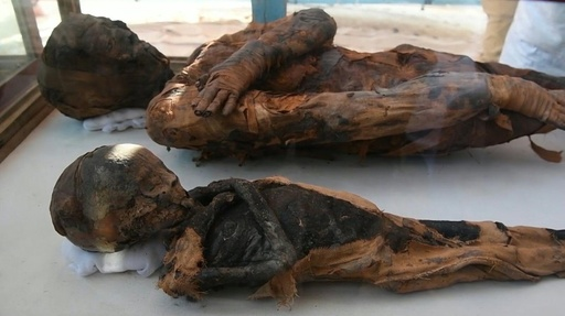 動画:エジプトでハヤブサ、ネズミのミイラ50体発見、観光客にPR
