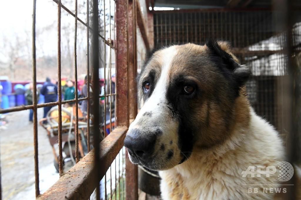 保護犬230匹を秘密裏に殺処分、韓国の動物愛護団体に非難 写真1枚 国際 ...
