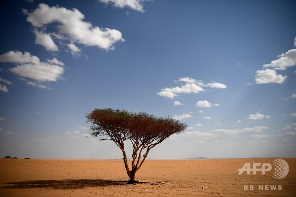 「不毛の砂漠」に樹木18億本、衛星画像とディープラーニングで発見 アフリカ