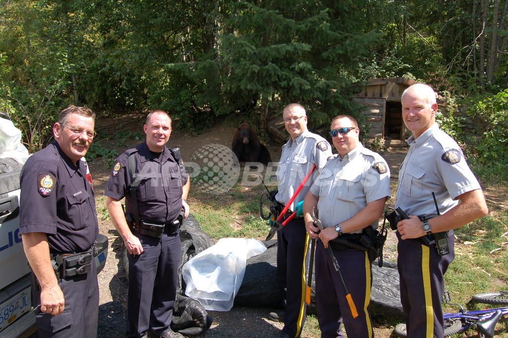 「マリフアナの番人」役のクマたち、州当局が殺処分を中止 カナダ