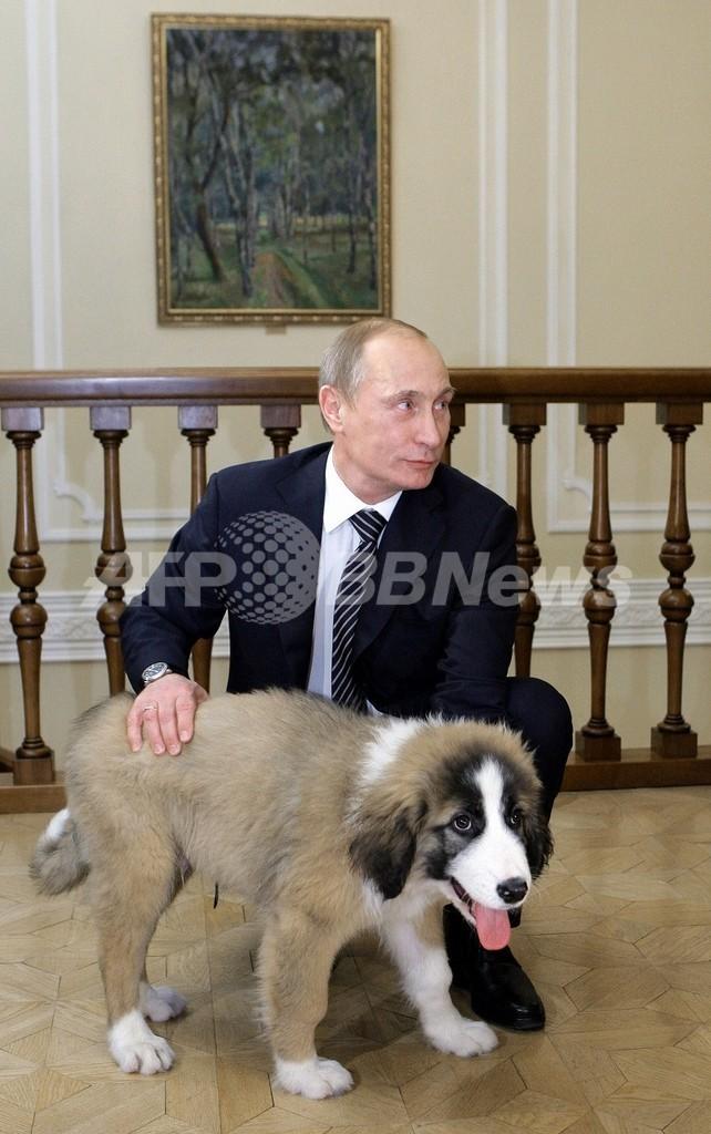 プーチン首相、キルギスの山の名前に?