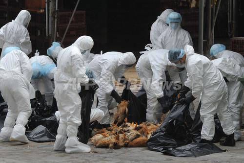 H5N1型を検出、市場のニワトリ1...