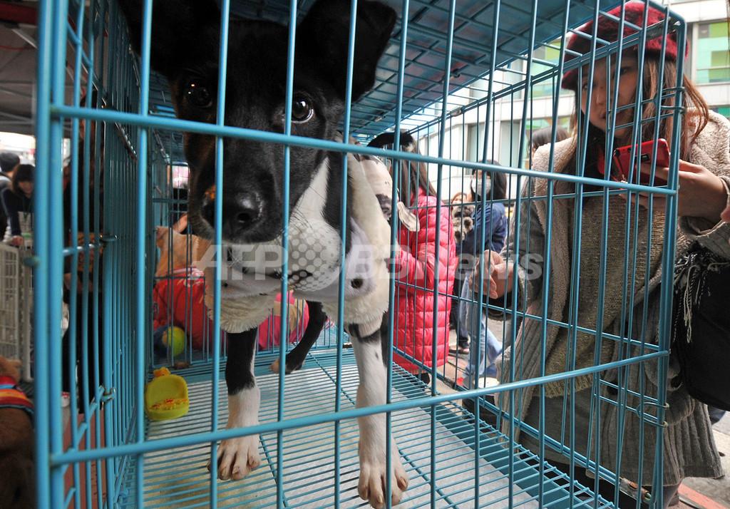 違法食肉処理場から犬の陰茎435本を押収、台湾・雲林県