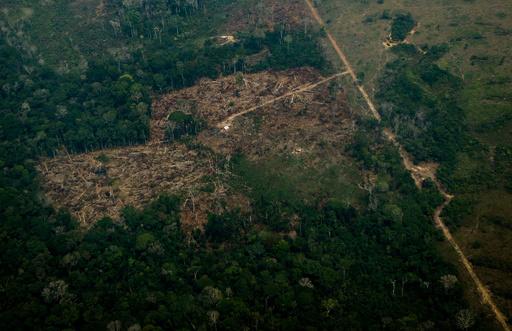 アマゾン熱帯雨林、2035年までにCO2吸収能力失う恐れ 研究