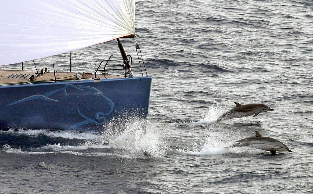 波乗り男性、イルカと衝突し負傷 豪ビーチ