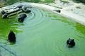 動物たちの暑さ対策 河北石家庄動物園
