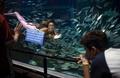 海洋汚染から生物守って、人魚姿で訴え ブラジルの学生