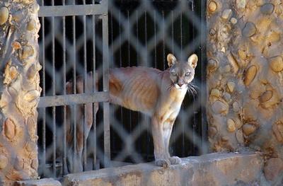 経済危機ベネズエラの動物園、飼育動物を猛獣の餌に 共食いも