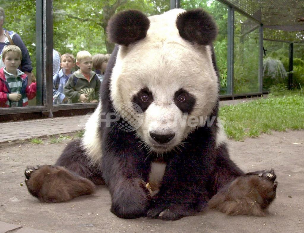 世界最年長の雄パンダ「バオバオ」、34歳で死す ドイツ
