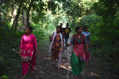 絶滅寸前のトラ、生息数倍増 カギは隠しカメラと地元民の協力 ネパール
