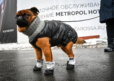 【今日の1枚】ワンコにも靴が必要 モスクワ