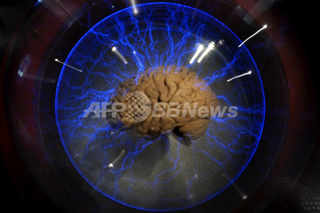 人間の脳の詳細な3Dモデルが完成、研究