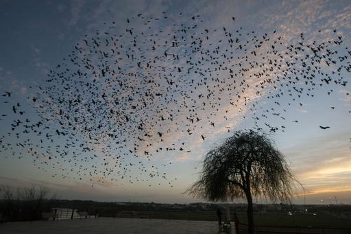 【今日の1枚】鳥だけが国境を自由に越える