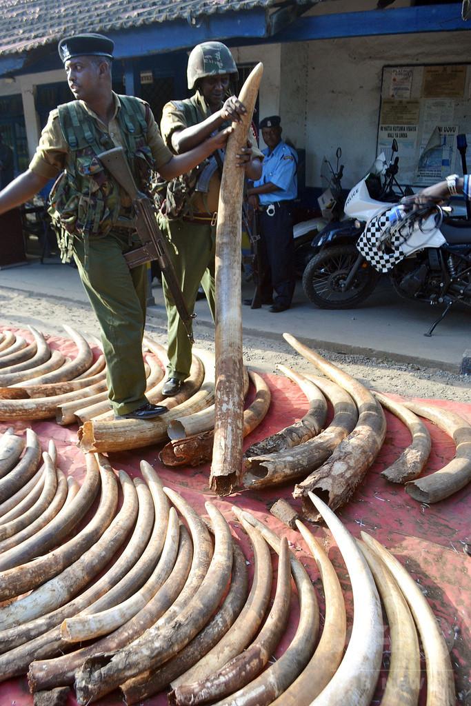 象牙密売、背後で暗躍する犯罪組織 ケニア
