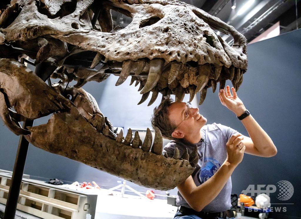 【今日の1枚】帰って来た博物館の主役、恐竜のトリックス