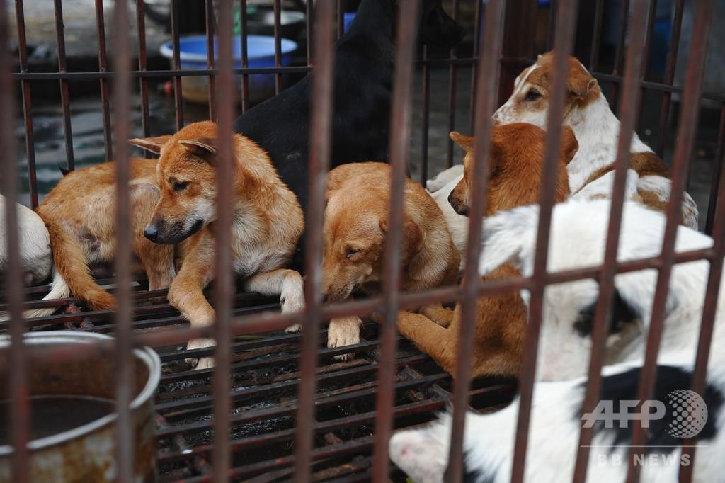 越首都ハノイ市当局、市民に犬肉食をやめるよう呼び掛け 猫肉も