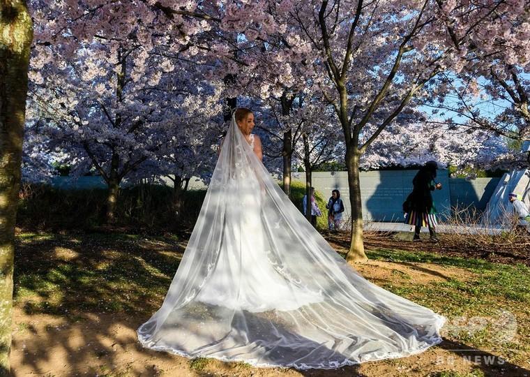 桜のそばで、ガザの動物園、超音波を発する、林丹が2年ぶりビッグタイトル、花ざかりの果樹園 青島