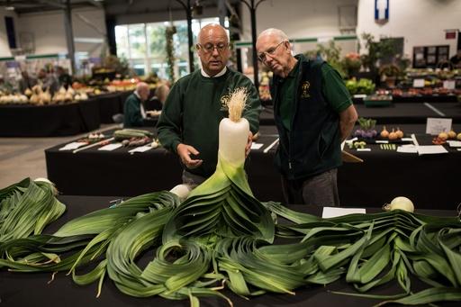 【今日の1枚】大根と見まがうほどのネギ、巨大野菜コンテスト