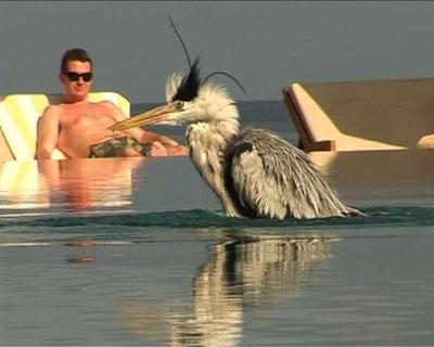 【動画】南国の楽園モルディブで味わう究極のラグジュアリー