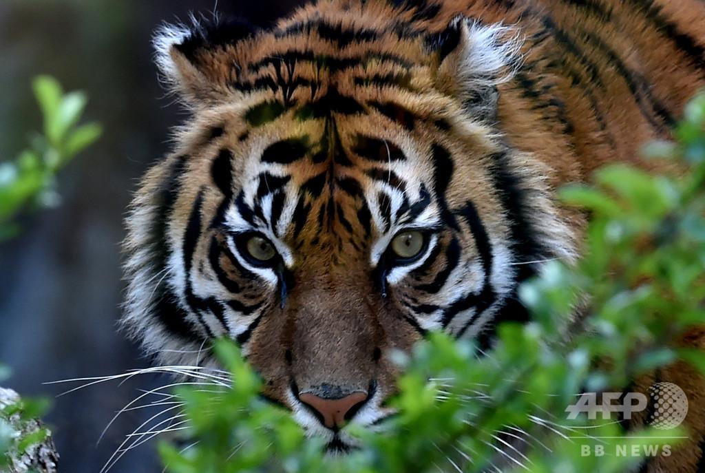野生動物の密輸網を世界一斉摘発、1万匹超を保護 約600人逮捕