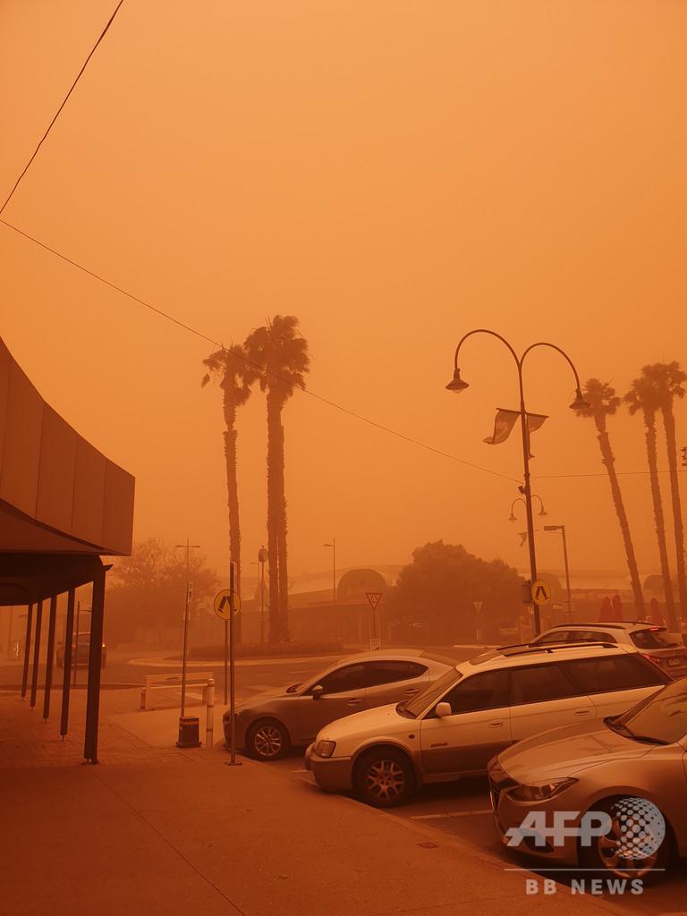 豪森林火災、被災コアラのための募金が100万豪ドル突破