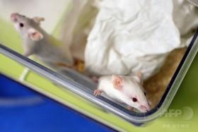 抗酸化サプリにがん転移促進作用か、マウス実験 米研究