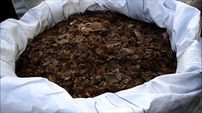 動画:センザンコウのうろこ2.8トン押収、10億円相当 マレーシア