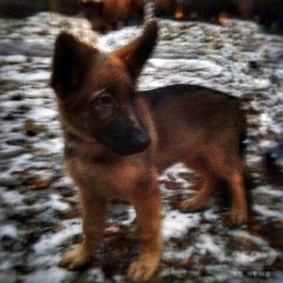 ロシア、フランスにシェパード子犬贈呈 警察犬「殉職」受け