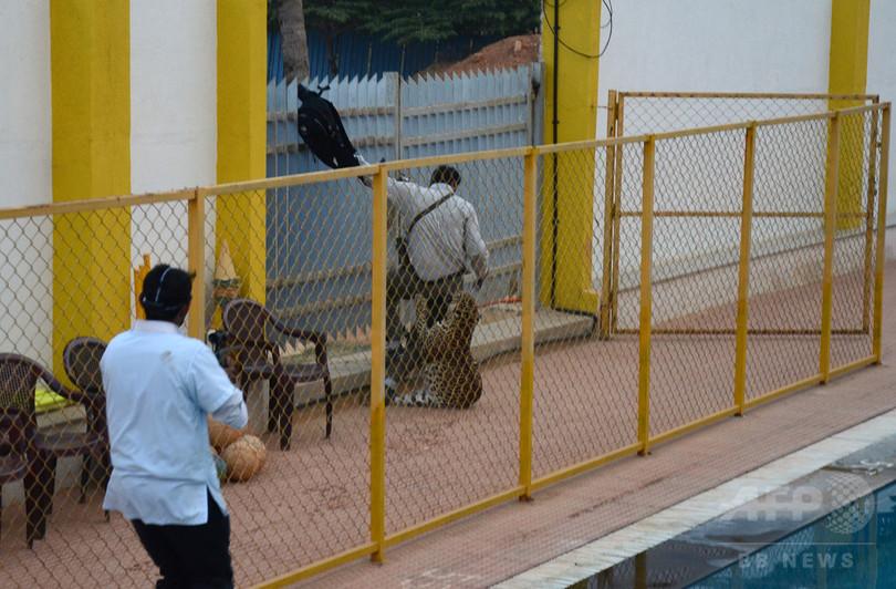5人負傷させたヒョウ、動物園から脱走 インド