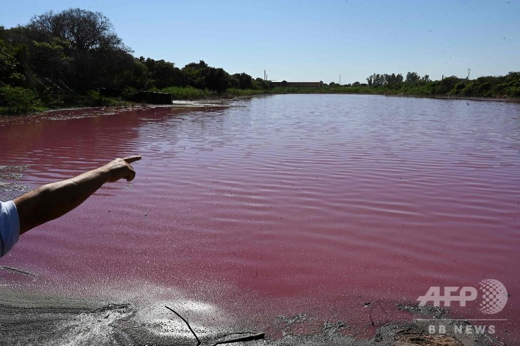 池がピンク色に…原因は皮なめし工場か パラグアイ