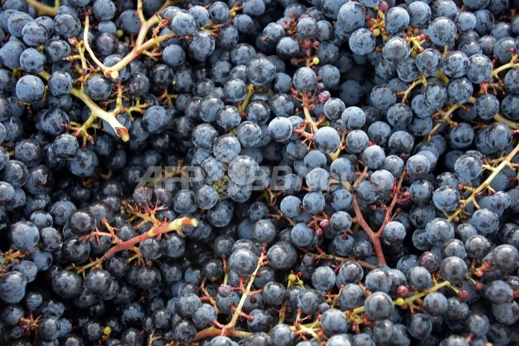 ワイン不足予測に業界が反論、「13年の生産は好調」