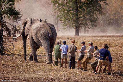 密猟取り締まり中の英兵、ゾウに襲われ死亡 マラウイ
