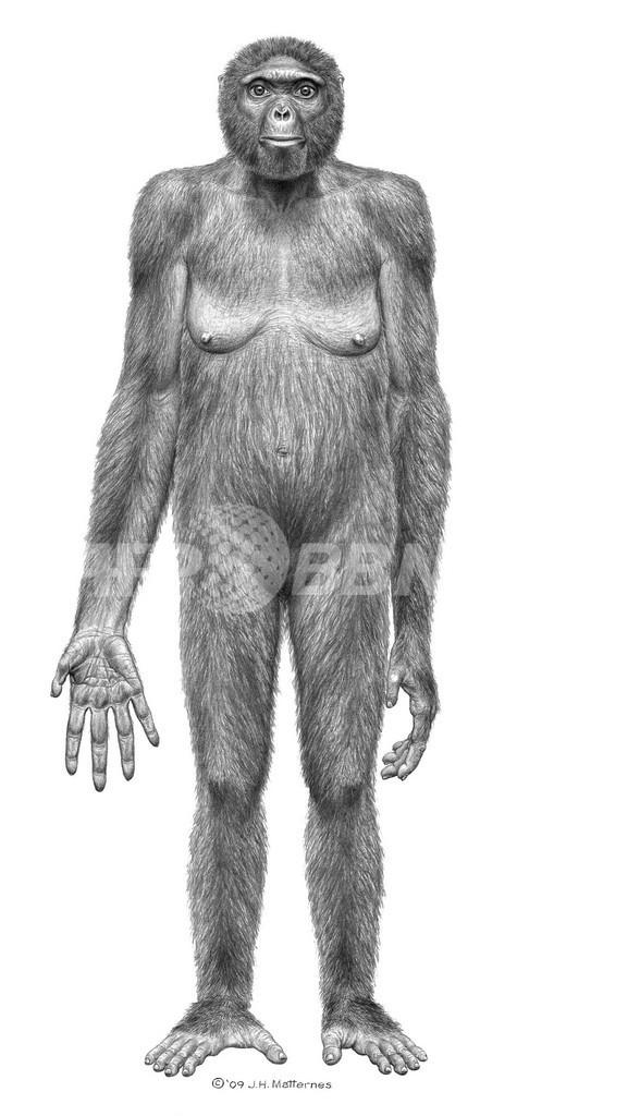 最古の猿人、440万年前の全身骨格化石を発見