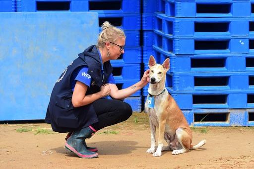 ロヒンギャ問題への関心維持に一役 「人道犬」が人気者に