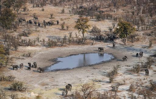 ボツワナ、ゾウの狩猟禁止措置を解除 環境保護団体も賛否分かれる